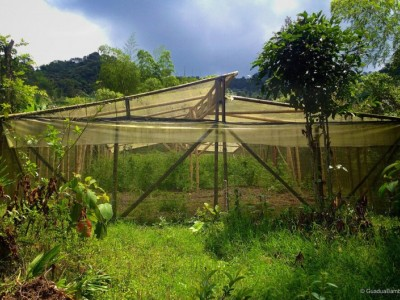 Sustainable Community Learning Farm